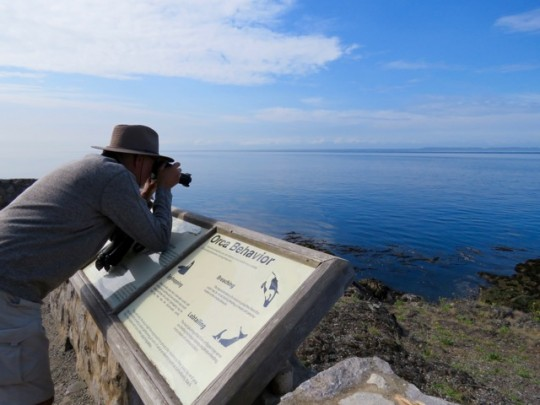 Searching For Whales