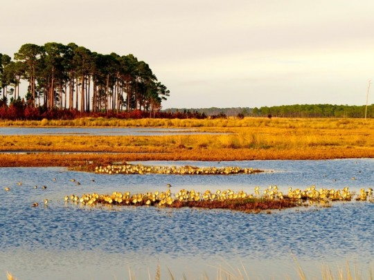 St. Mark's Wildlife Refuge, Florida Panhandle