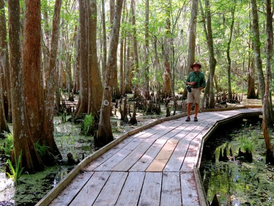 Exploring The Louisiana Swamps