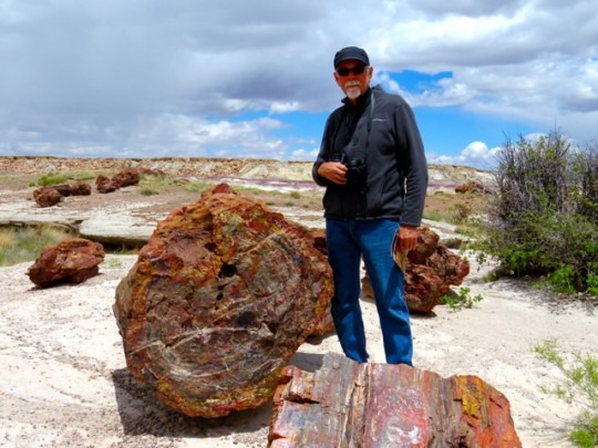 The Magnificent Petrified Forest