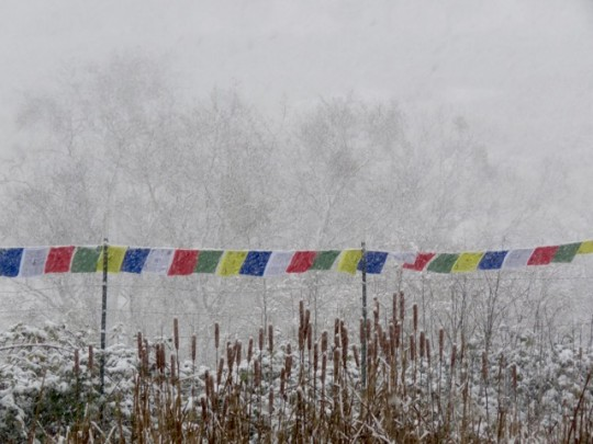 Prayer Flags In A Snowstorm