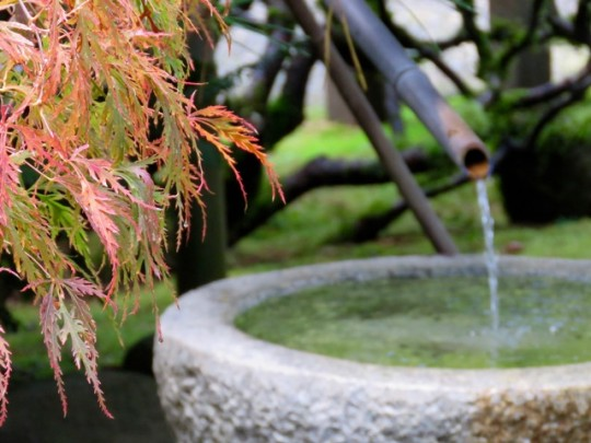 Bamboo Fountain And Autumn Leaves