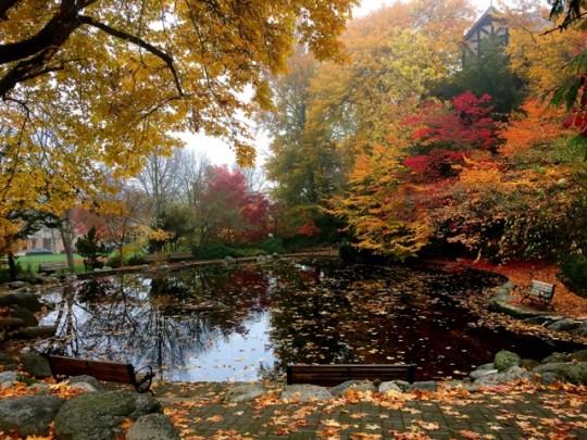 Beautiful Lithia Park