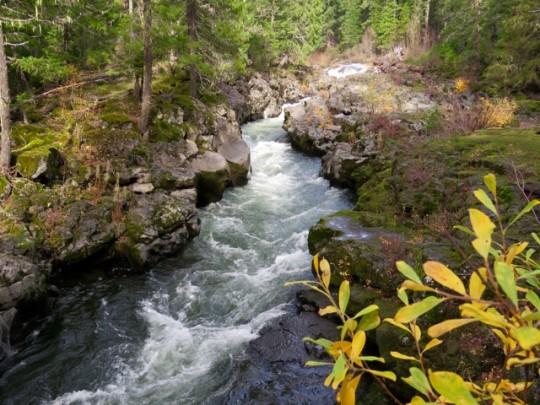 The Rogue River Near Natural Bridge