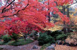 A Beautiful Autumn In Ashland