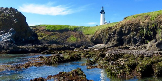 Lighthouses And Tidepools: Newport, OR