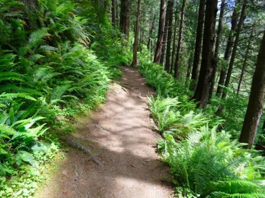 Lush Ferns On Cape Falcon Trail