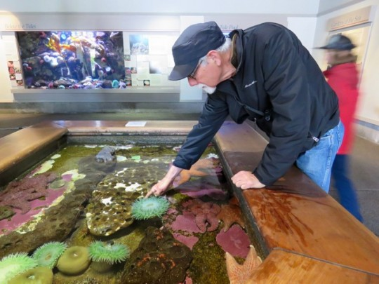 Irresistible Touch Tank