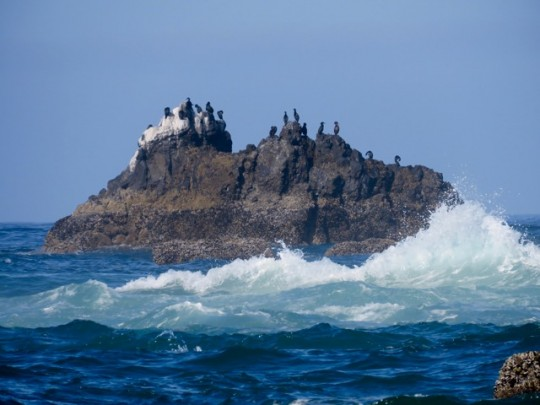 A Picturesque Cormorant Colony