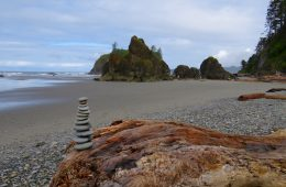 Tidepools And Rainforests: Olympic National Park