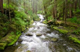 A Rainy Day Hike To Sol Duc Falls