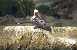 The Central California Coast: Monterey, Morro Bay, & Ojai