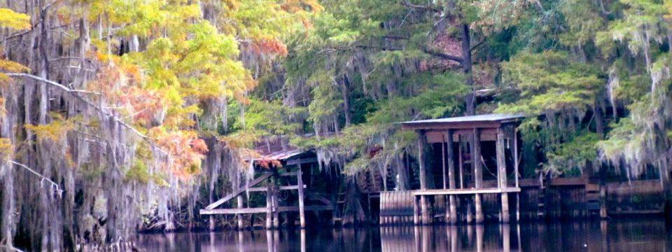 Swamps & Bayous