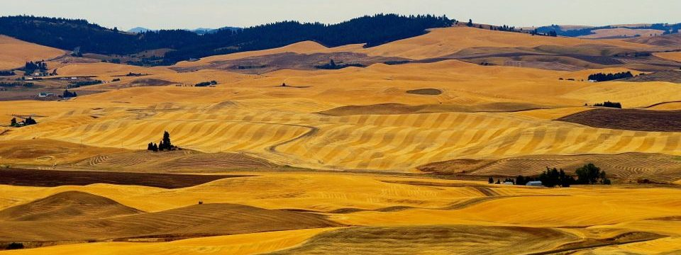 The Golden Hills Of The Palouse